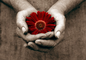 hands_giving_flower