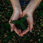 5 razões para os ambientalistas usarem os princípios católicos